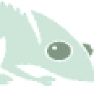 cropped-Geckos3.png